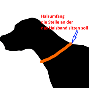 Hundehalsband richtig messen