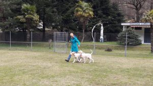 dogside hundeschule und pension im tessin