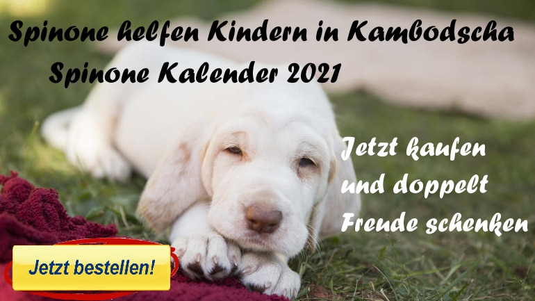 Spinone Kalender 2021 Spendenaktion
