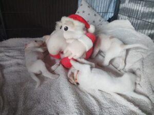 Geschenkideen für Hundemenschen und ihre Vierbeiner